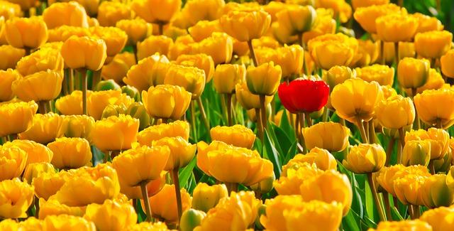 プロポーズの場所|お花畑