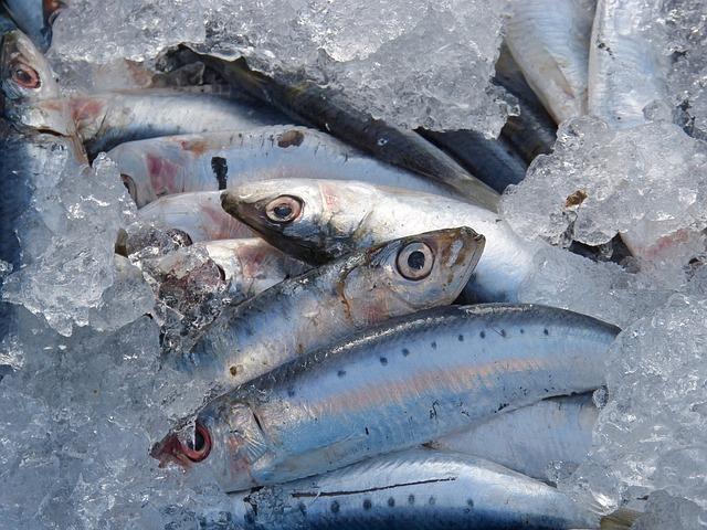内臓脂肪にいい食べ物|青魚